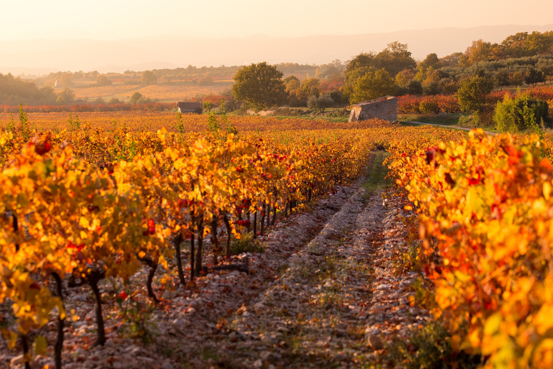 The Rhone Vineyards