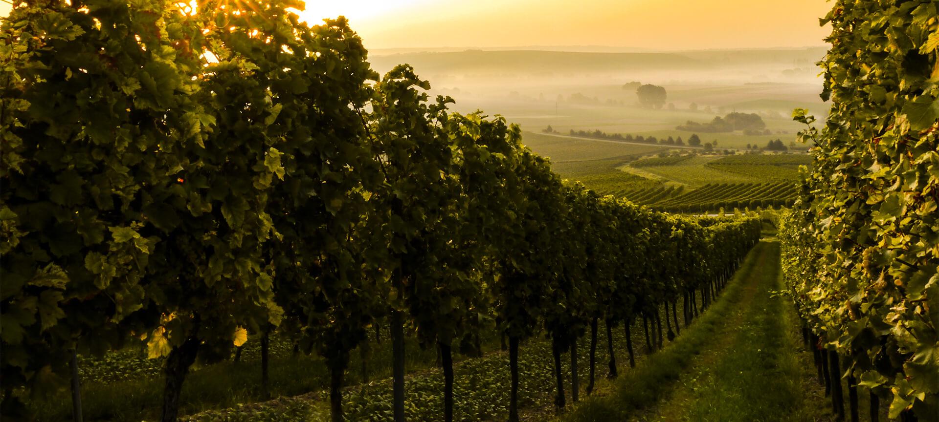 La Vallée du Rhône : 2ème vignoble d'AOC français